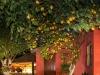 Korfu, Acharavi im Lemon Garden