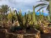 vegetation-fuerteventura