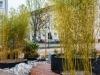 Bambus in den Tagesgärten von Premnitz